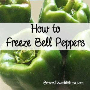 Yes, you can freeze bell peppers. Whether you get them from your garden or on sale at the grocery store, freeze bell peppers to keep their flavor and color intact for your favorite recipes.
