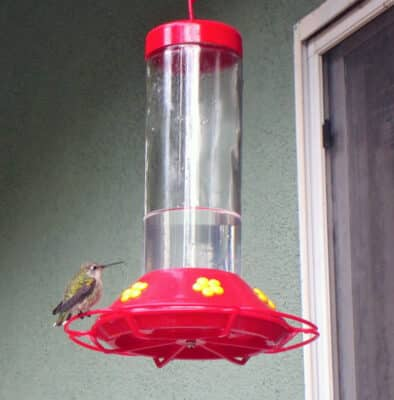 Looking for the best hummingbird feeder? Here's my review of several popular hummingbird feeders, and what to look for when buying a feeder.