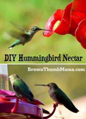 You can make hummingbird nectar with two items you already have in your kitchen. Plus important tips on what you should NEVER feed to hummers!