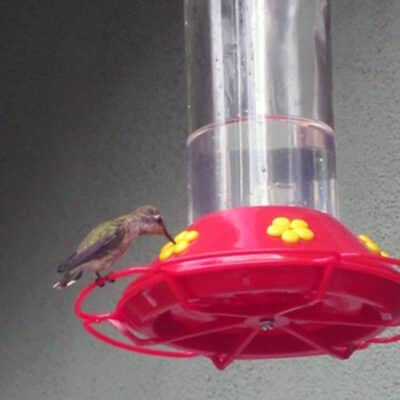 How to Make Hummingbird Food: BrownThumbMama.com