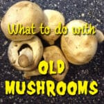 What to do with old mushrooms