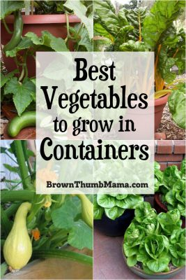 These are the 5 best vegetables to grow in containers. You can grow a garden, even in the smallest spaces! #gardening #vegetablegardening #organicgardening