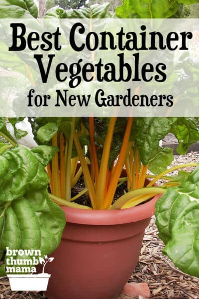 Here are the 5 best container vegetables for beginning gardeners. They're all easy to start from seed and will grow happily in pots on your patio, driveway, next to your pool...wherever they fit. #gardening #vegetablegardening #containergardening