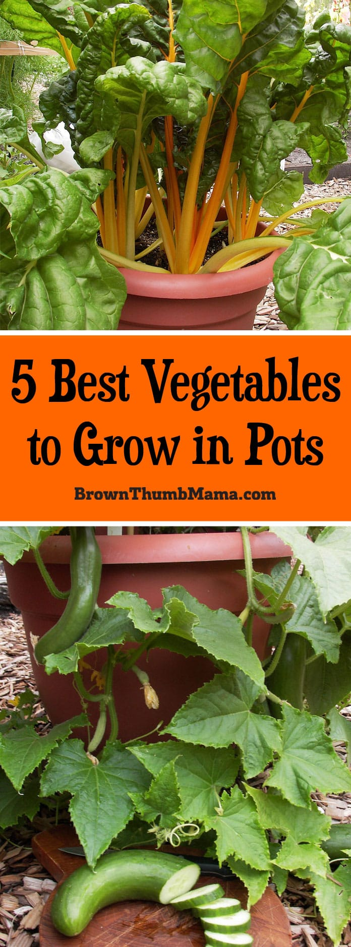 container vegetable garden. You DO Have Space For A #garden! These 5 #vegetables Grow Great In Container Vegetable Garden