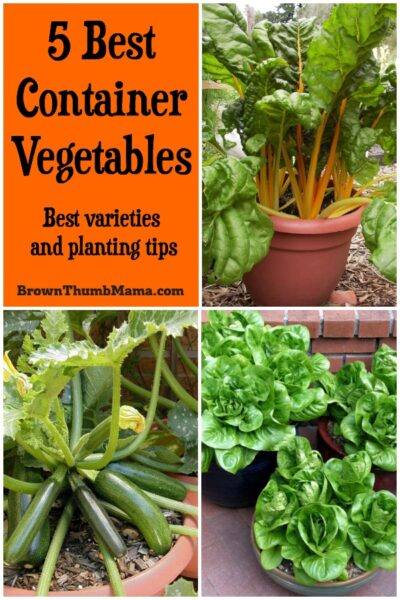 Here are the 5 best container vegetables for your garden. Planting tips and container gardening advice included. #gardening #organicgardening #vegetablegardening