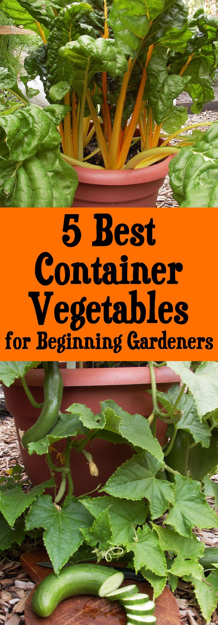 5 best container vegetables for beginning gardeners - Best vegetables for container gardening ...
