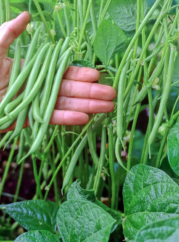 You DO Have Space For A #garden! These 5 #vegetables Grow Great In