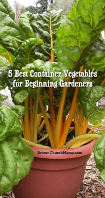 5 Best Container Vegetables for Beginning Gardeners: BrownThumbMama.com