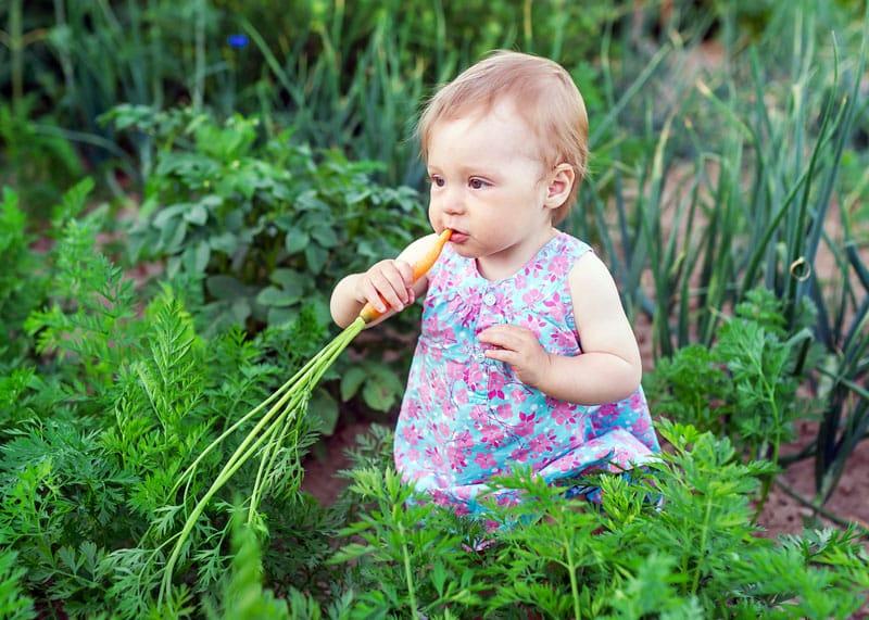 baby eating carrot in garden