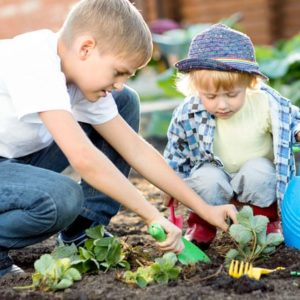 kids planting strawberries