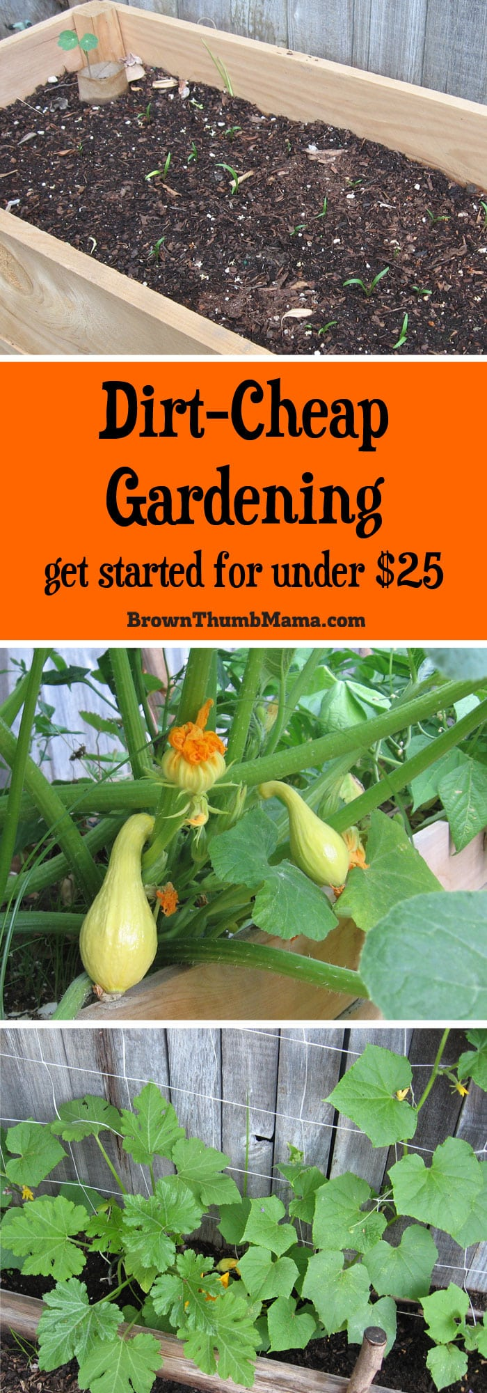 Want to grow a cheap vegetable garden? For under $25, you can build a raised bed garden WITH plants and grow enough yummy food to make your money back.
