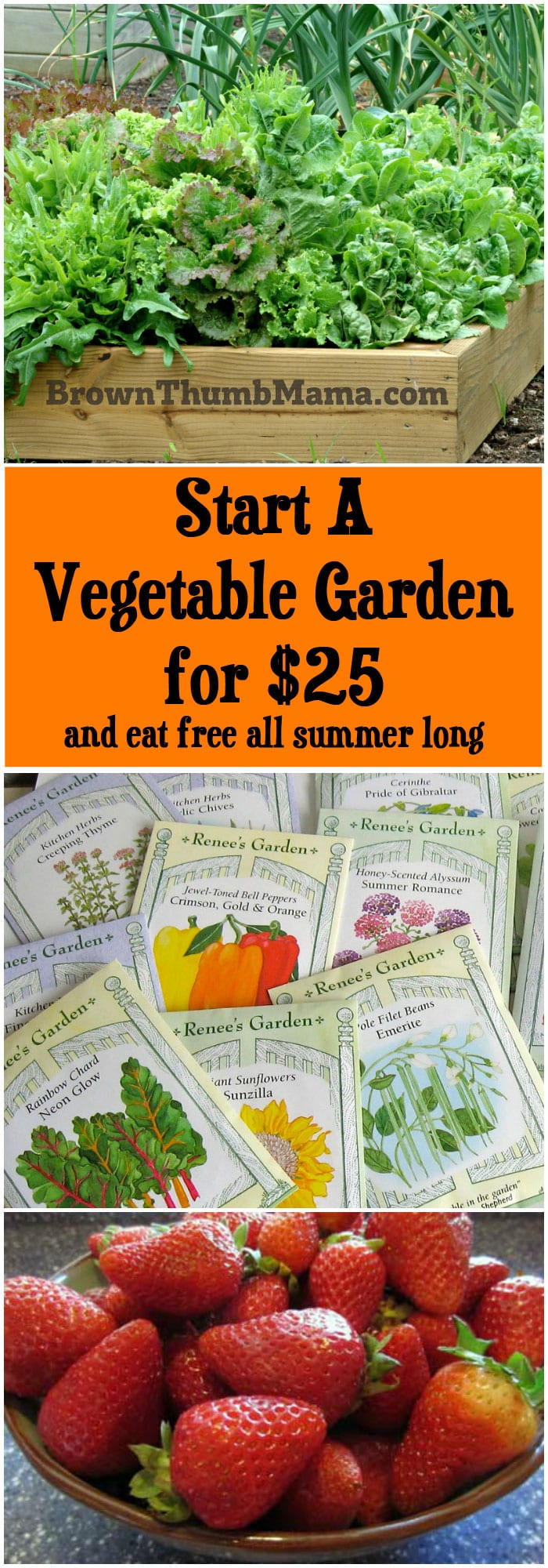 Start A Vegetable Garden For $25