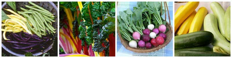 colorful vegetables for garden