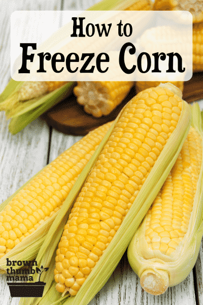 corn on the cob on wood table