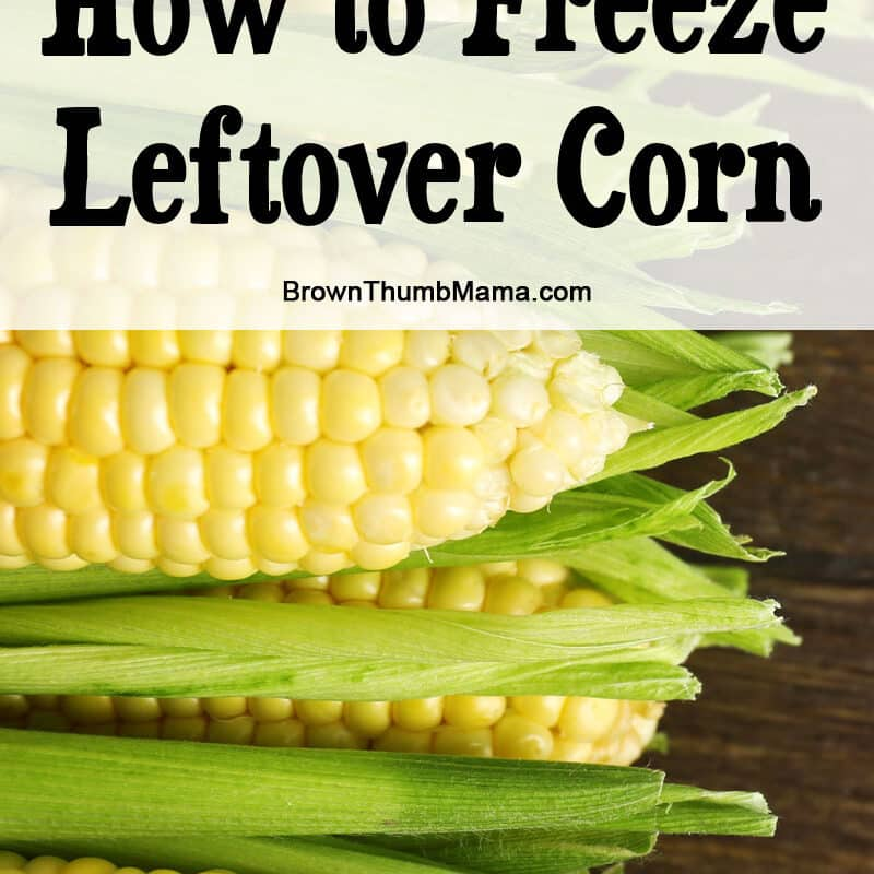 How to Freeze Leftover Corn