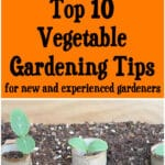 Top 10 Vegetable Gardening Tips for New & Experienced Gardeners