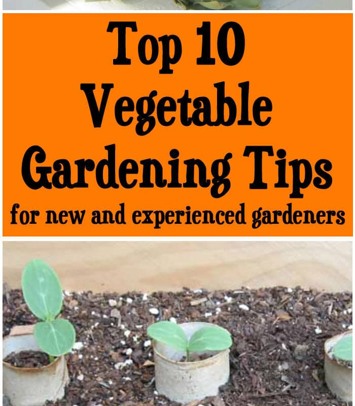 Top 10 Vegetable Gardening Tips For New Experienced Gardeners