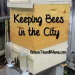 Keeping Bees in the City: BrownThumbMama.com
