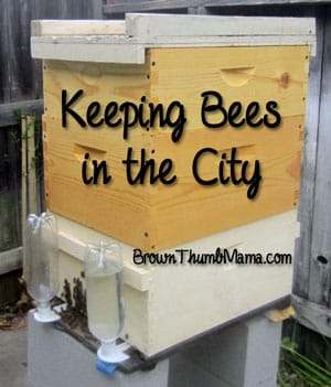 Keeping Bees in the City of Sacramento: The First 30 Days