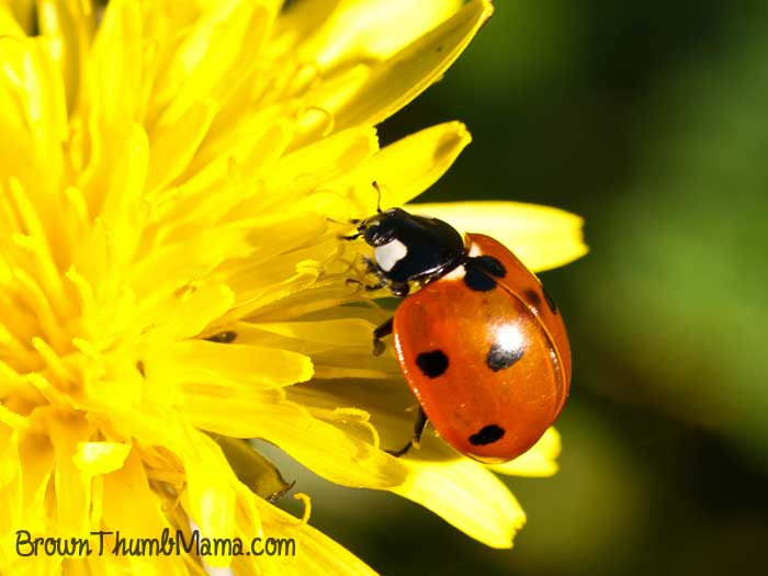 10 Ways to Naturally Control Bugs in Your Garden