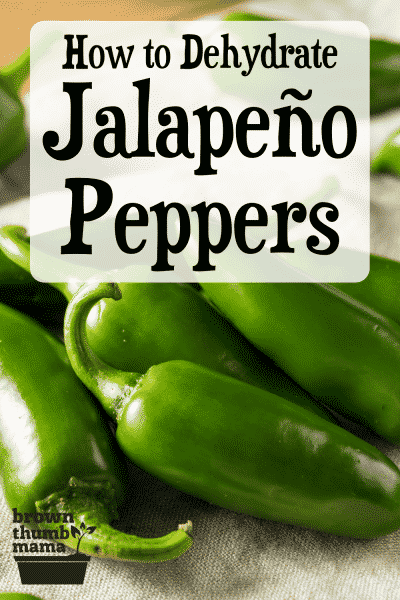 green jalapeno peppers on a table