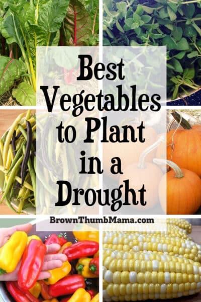 chard, green beans, pumpkin, peppers, corn