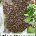 Keeping Bees in the City: The Swarm