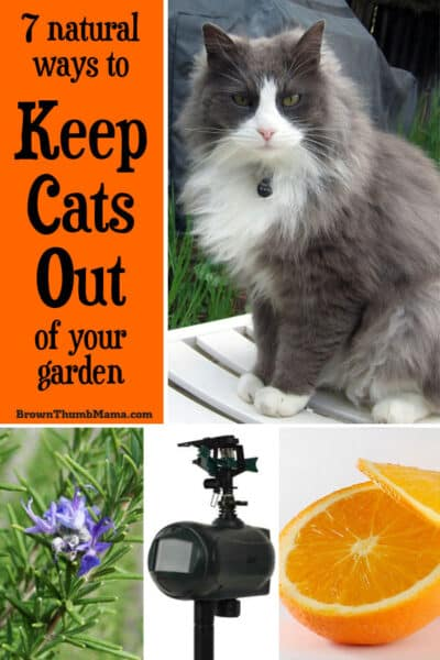 Nobody wants cats digging in their garden--or worse, using it as a bathroom. Here are 7 proven natural ways to keep the kitties out of your garden.