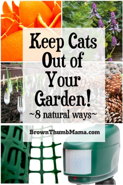 8 natural ways to keep cats out of your garden