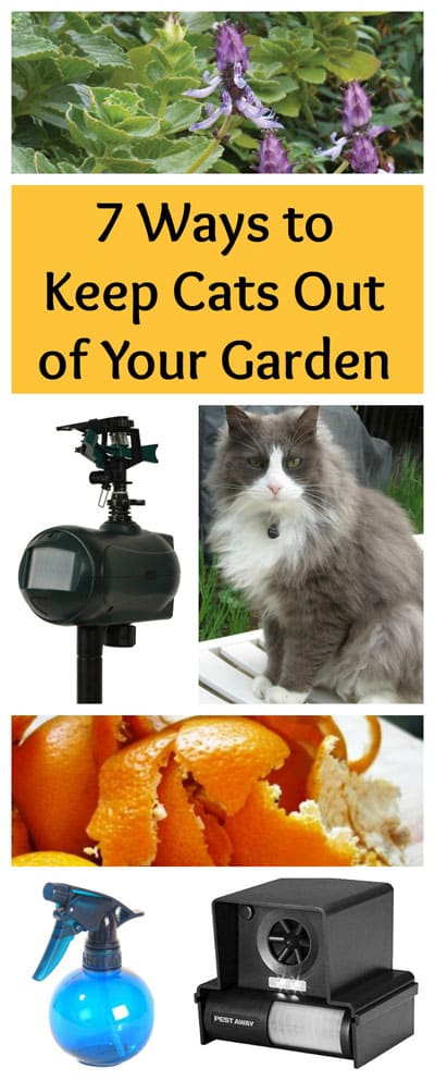 Keep Cats out of Your Garden: BrownThumbMama.com