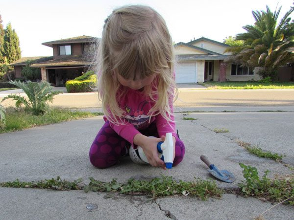 little girl sprays weeds on driveway