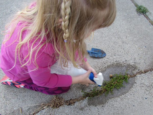 little girl spraying weeds in sidewalk