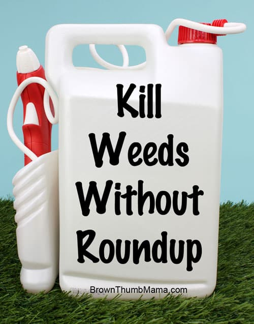 Kill Weeds Without Using Roundup