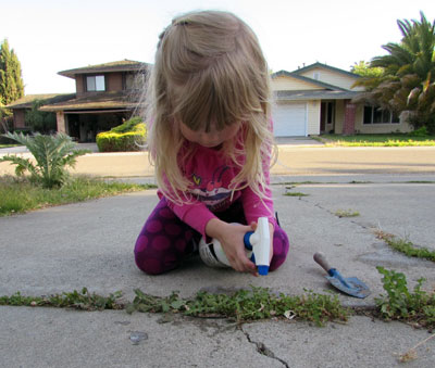 How to Kill Obnoxious Weeds Without Using Roundup