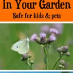 Natural Ways to Get Rid of Bugs in Your Garden