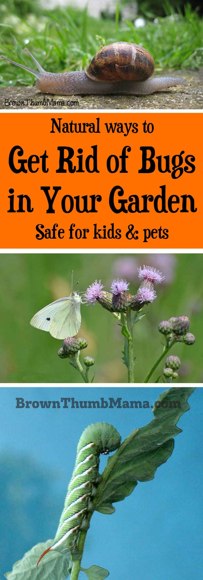 Natural ways to get rid of bugs in your garden brown - How to get rid of bugs in garden ...