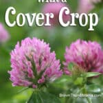 Improve Garden Soil with a Cover Crop