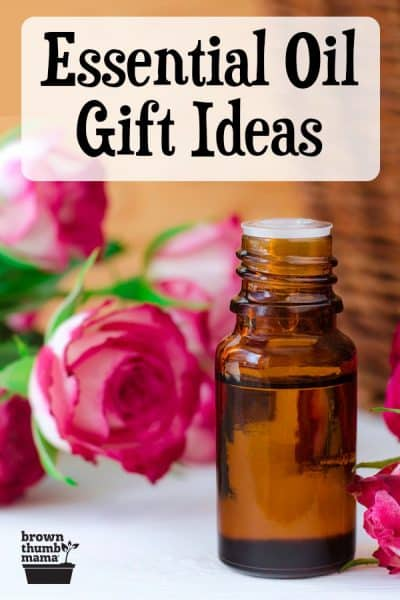essential oil bottle and roses