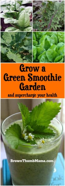 Supercharge your health and save big by growing the vegetables for your green smoothie. These varieties are easy to grow, with maximum nutrition.