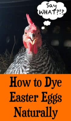 How to Dye Easter Eggs Naturally: BrownThumbMama.com