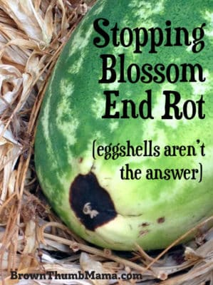 "Yes, you can fix blossom end rot. While you can't ""heal"" a vegetable that's already damaged, here's how to prevent blossom end rot from happening again."