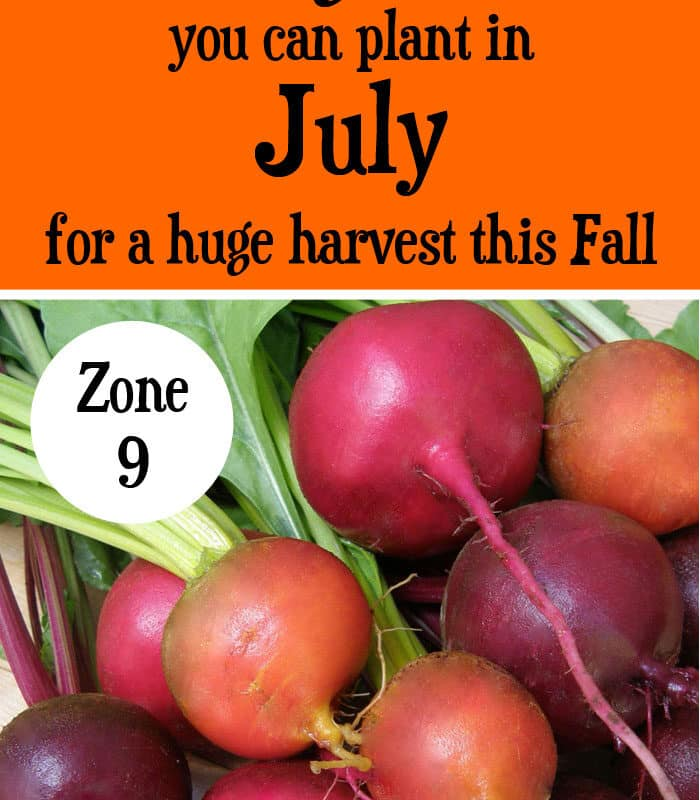 10 Vegetables You Can Plant in July {Zone 9}