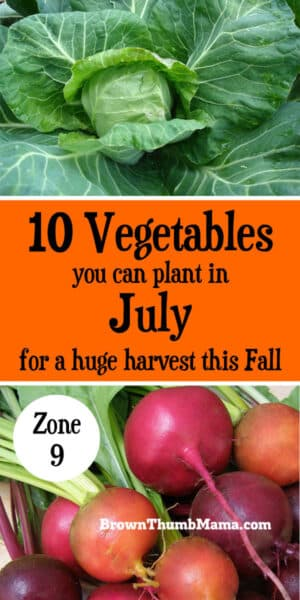 It's not too hot to garden! Plant these 10 vegetables in July for a huge harvest this Fall. Includes recommended varieties and growing tips. (Zone 9) #gardening #organicgardening #vegetables