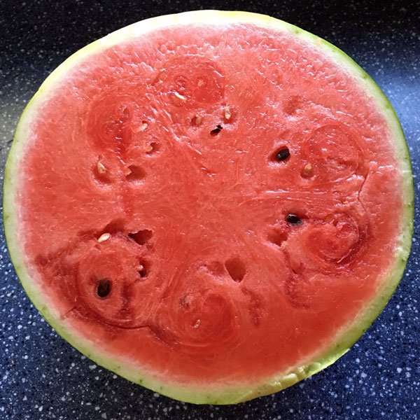 Want to know when to harvest your watermelons so you get sweet, juicy fruit every time? Be a watermelon-picking rock star with these important tips.