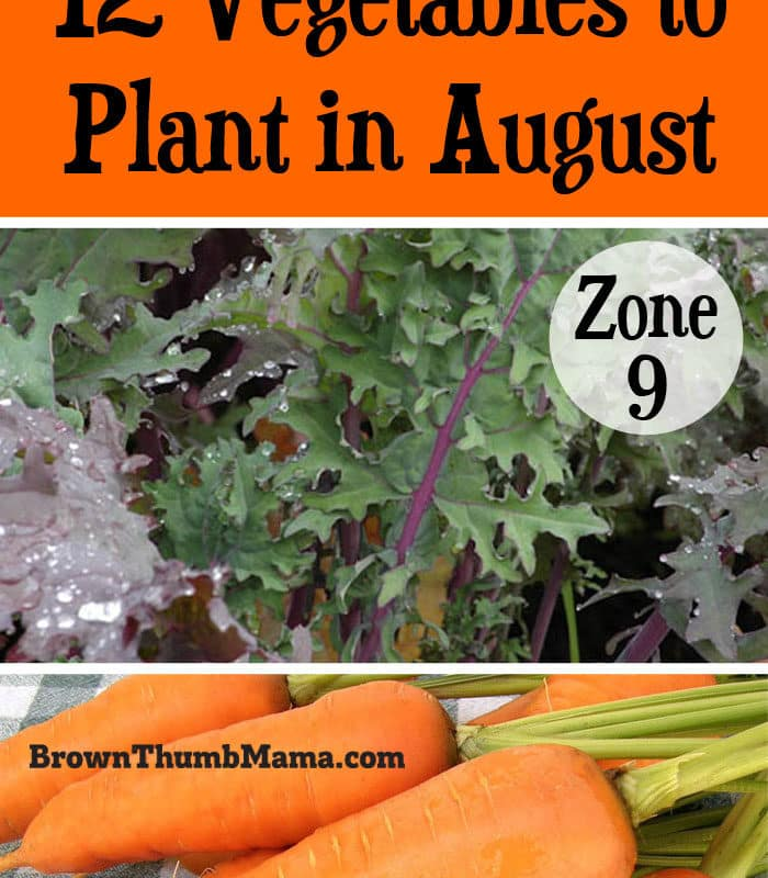 12 Vegetables to Plant in August {Zone 9}
