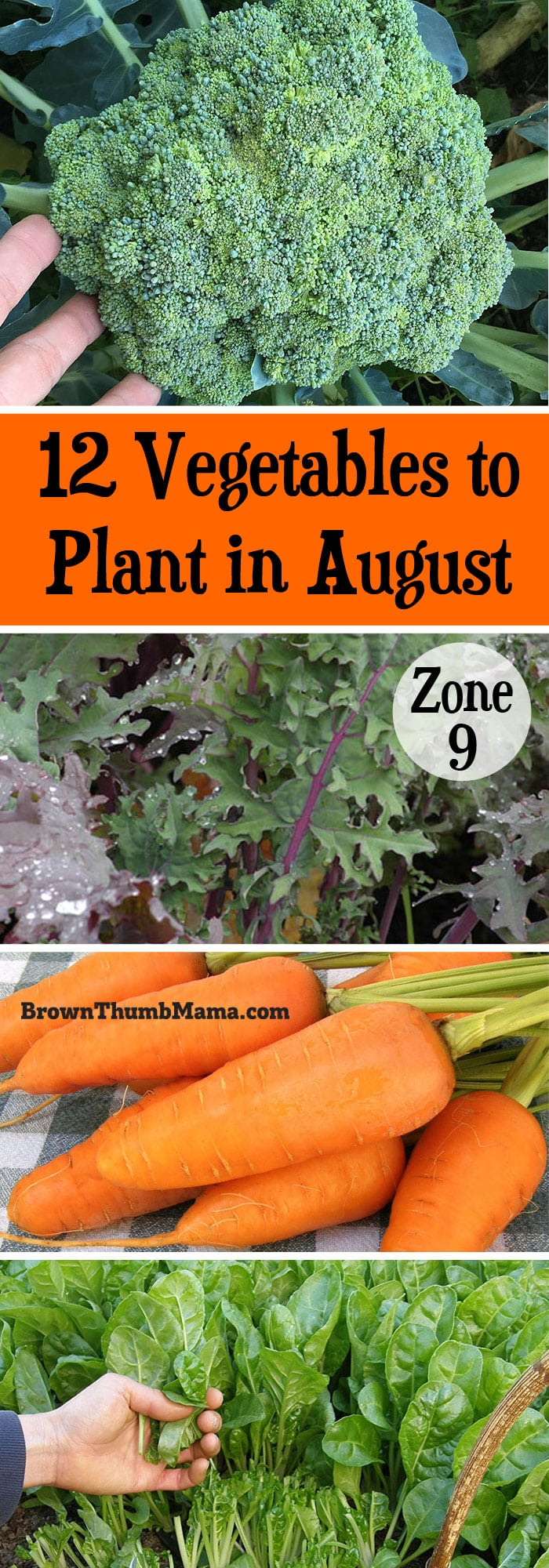 Plant These 12 Vegetables In August For A Tasty Harvest This Fall Includes Recommended Varieties