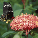 Create a garden that attracts butterflies and hummingbirds with these beautiful plants. Includes best varieties and planting tips.