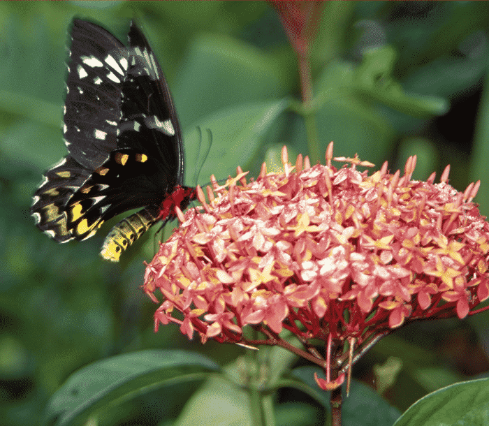 Create a Butterfly & Hummingbird Garden