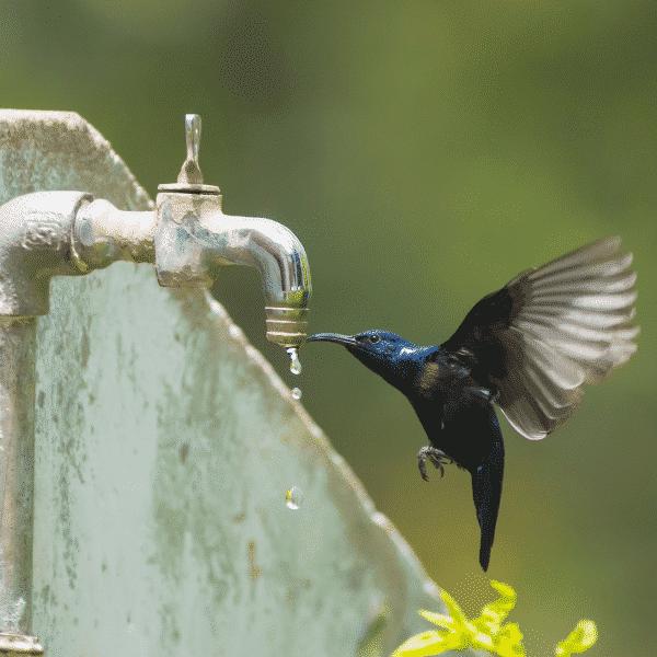 hummingbird drinking from faucet