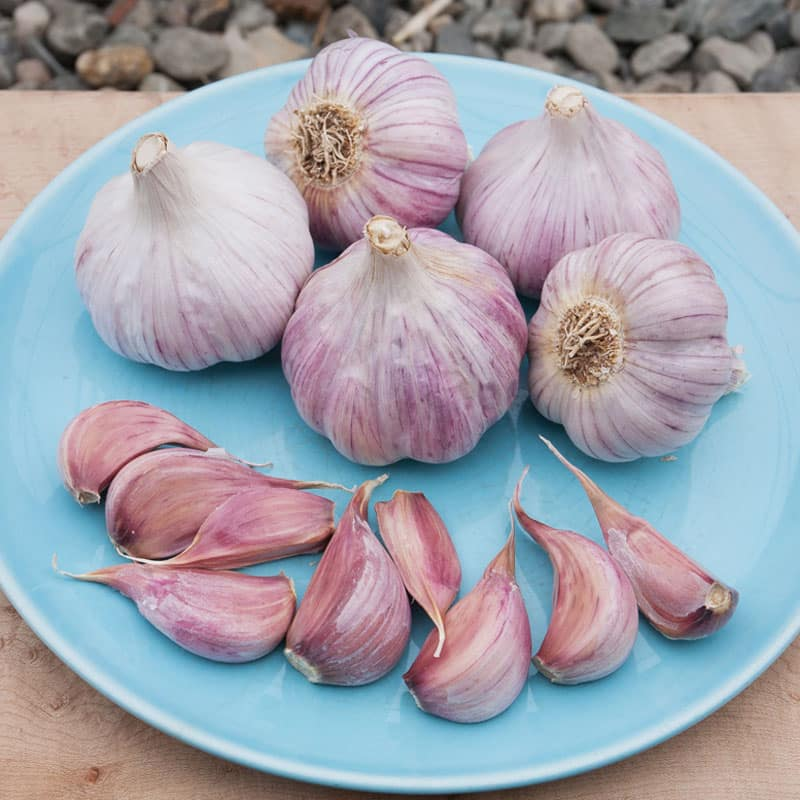 Learn the different types of garlic, how to grow and store them, and how to choose the best type of garlic to grow for your area.